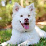 pet planning